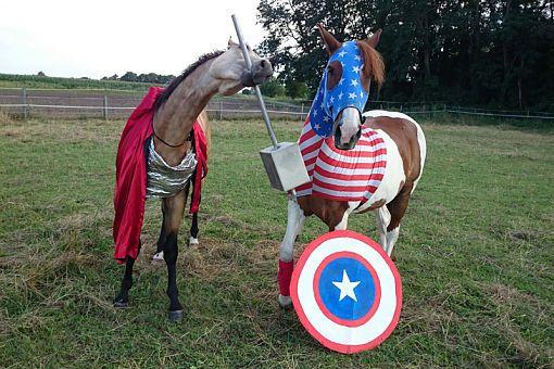 CAVALLO Schräg Witzig Skurril aus der Pferdewelt Pferdefotos