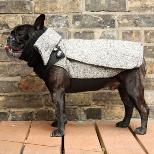 Nuggets Yellow Warm Up Jacket: 52 Best Custom Made Dog Snowsuits & Raincoats Images On