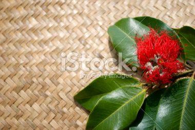 Pohutakawa & Kete, New Zealand Summer or Christmas Background Royalty Free Stock Photo