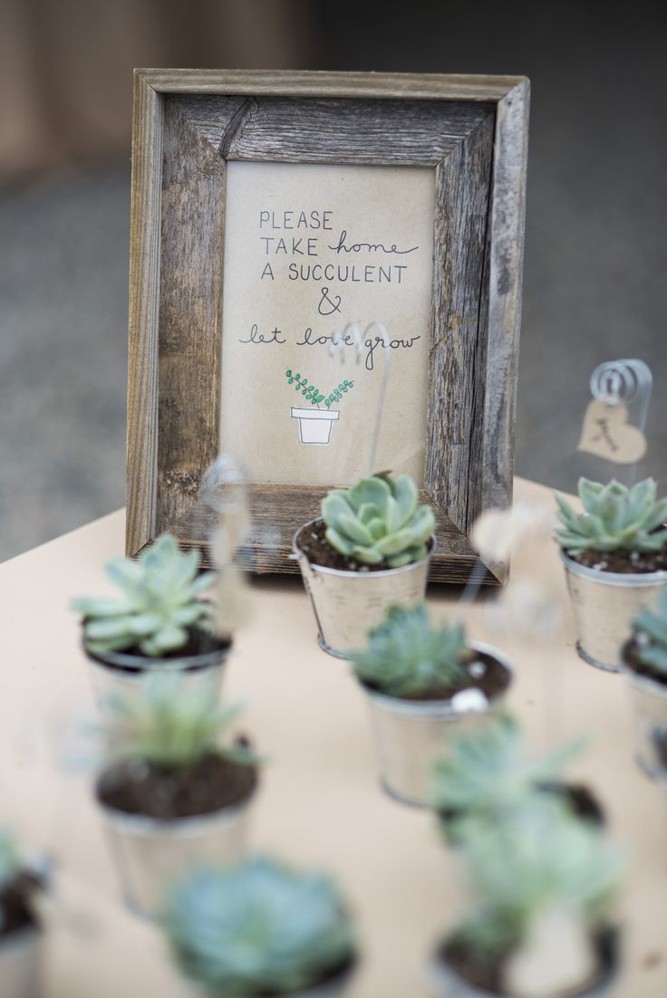 succulent favors.                                                                                                                                                                                 More
