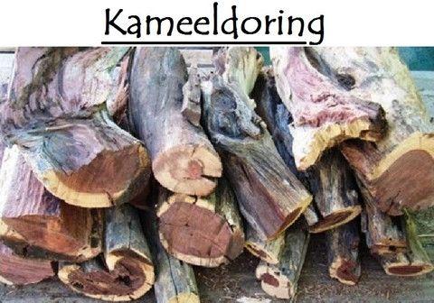 Kameeldoring / Camelthorn