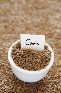 Cumin Plant Seeds (Cuminum Cyminum) Used Medicinal and as a culinary herb , SEEDS Are NON-HYBRID, 100% Organic, Heirloom