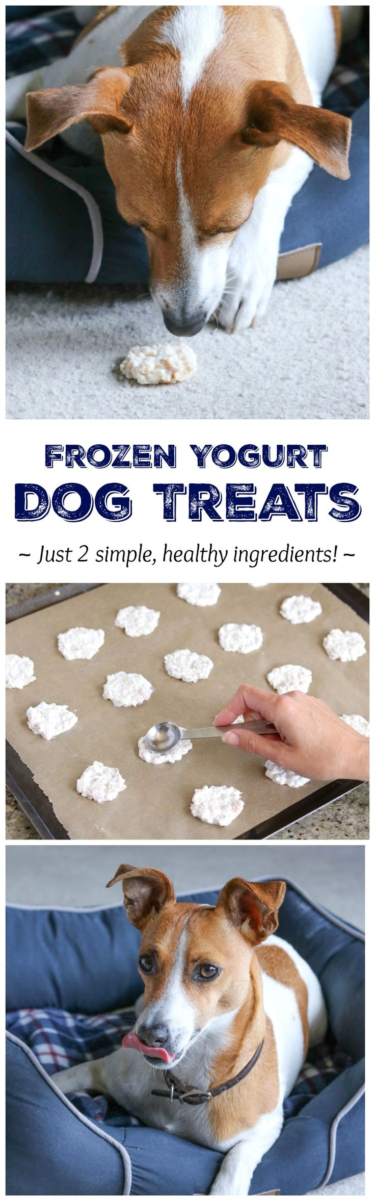 2-Ingredient Frozen Dog Treat Recipe (That Uses Up Leftover Chicken!)