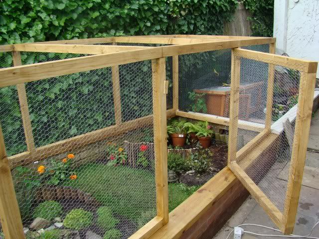 This was made for a very loved tortoise but could be adapted for guinea pigs with wire or a cover over the top to keep out predators.  For me, it would just be an outdoor playtime cage only with supervision... due to the raccoon and bobcat issue here.