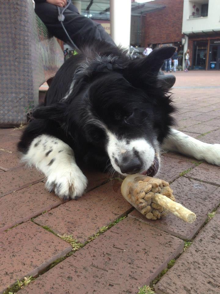 lekker honden ijsje eten