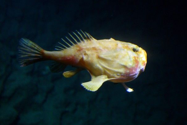 New fish species discovered in the caribbean s little for New fish discovered