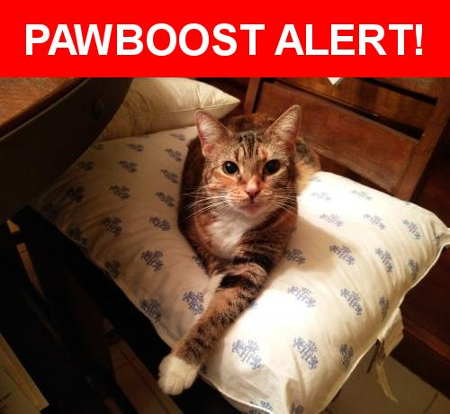 Please spread the word! Gumbo was last seen in Spring, TX 77379.    Nearest Address: Near Godstone Ln & Chipstead Dr