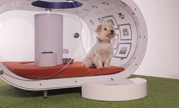 """""""O GRITO DO BICHO"""": Samsung apresenta uma casinha de cachorro moderna ..."""