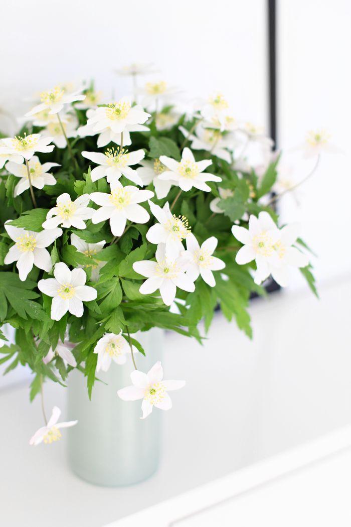 .white anemones..