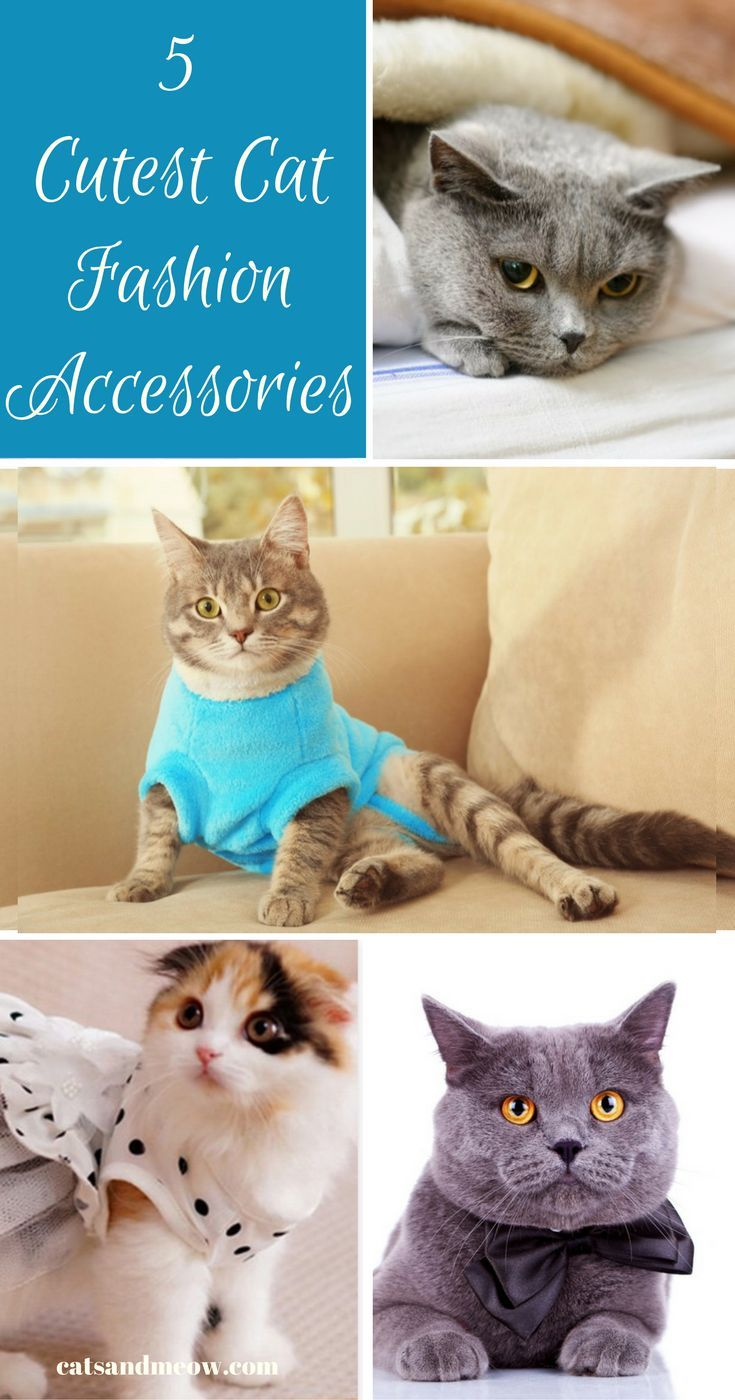 Looking for an excuse to dress your kitty up in something special, we're going to show you some of the cutest cat fashion accessories available on the market.
