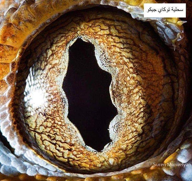مصور أرميني يلتقط صور مذهلة جد ا لعيون الحيوانات تبدو بعض هذه اللقطات مثل مناظر طبيعية لكواكب بعيدة لم يتم اكتشافها ب In 2020 Reptile Eye Photos Of Eyes Macro Photos