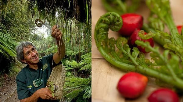 Maori food expert Charles Royal (left) teaches the secrets of foraging for Maori bush food, like the spiral-tipped fern known as the Bush Asparagus (right). Photos: Pete Seward