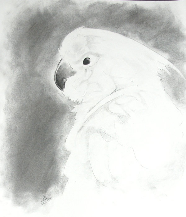 #cockatoos