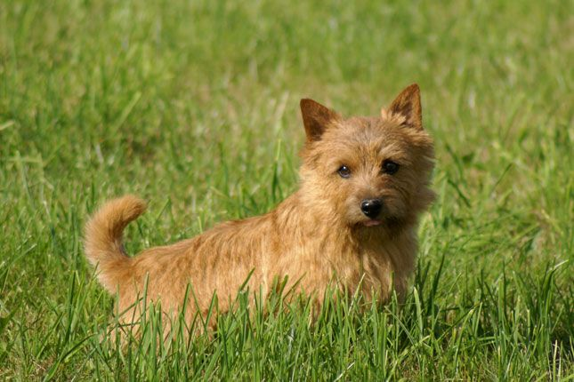 1000+ images about West Highland White Terriers and ...