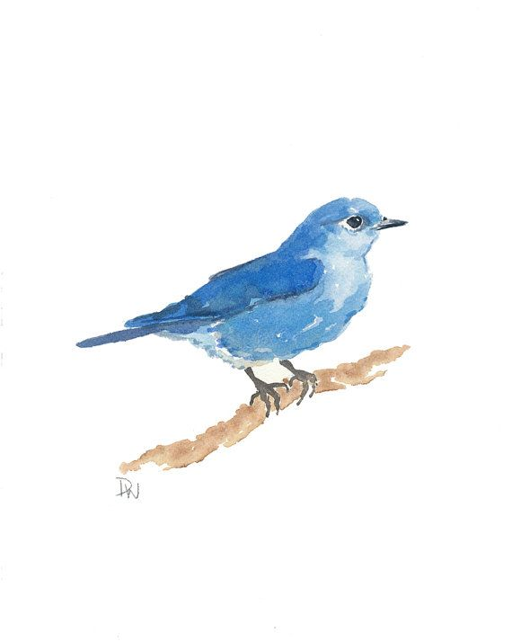 Original Bird Watercolor - Mountain Bluebird, Nature Art, Bird Illustration, 8x10.