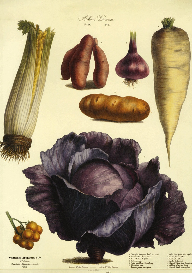 Sale Vintage Paris Botanical Vegetable Print on Heavy paper. $20.00, via Etsy.