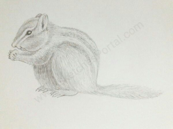 how to draw a chipmunk in 8 steps with pictures