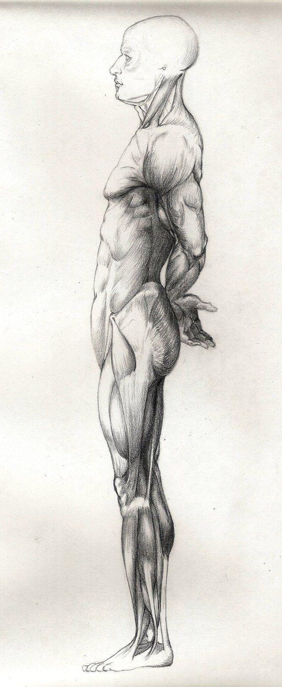 794 best Anatomía Artística images on Pinterest | Anatomy reference ...