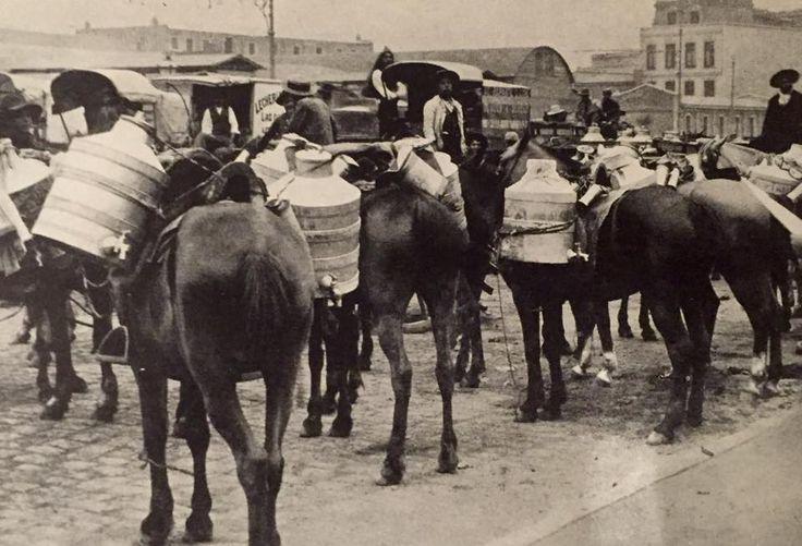 Lecheros en Valparaíso  (1928)