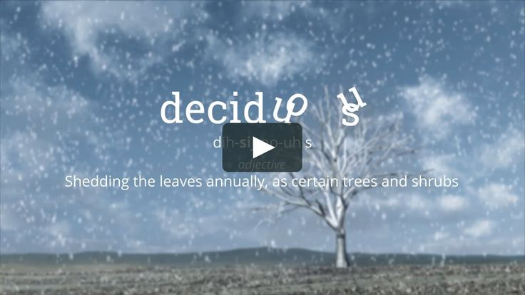 Word of the Day - deciduous - September 22, 2017 on Vimeo