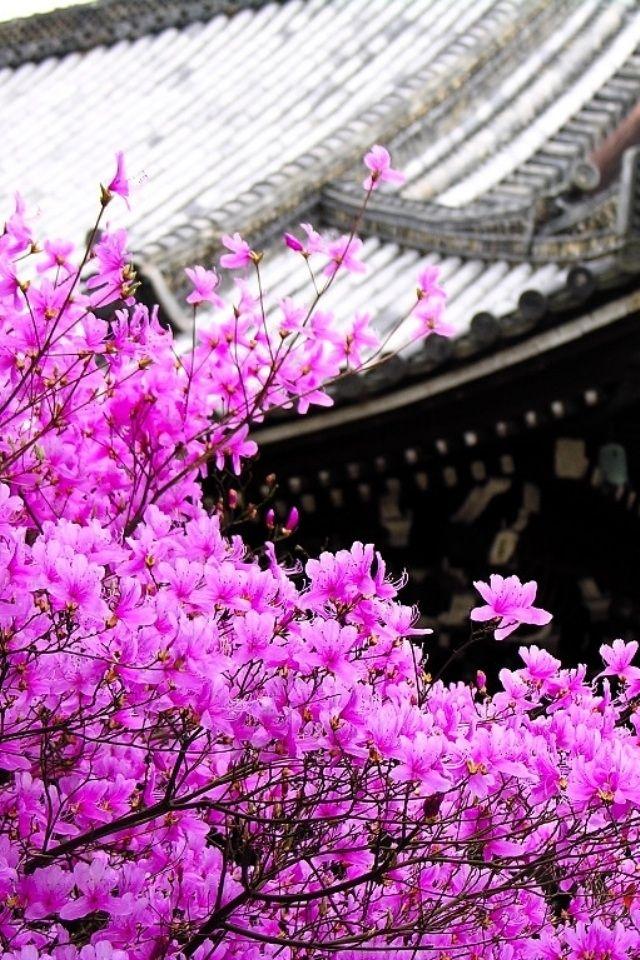 Beautiful Iphone Wallpapers Bing Images Pink Wallpaper