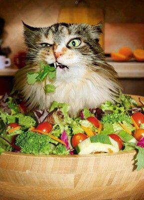 dyingofcute: - Alors, vous pensez vraiment que c'est de la nourriture?