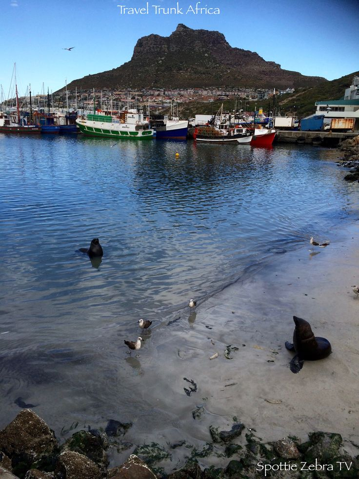 Seals, boats and mountains - Hout Bay Harbour