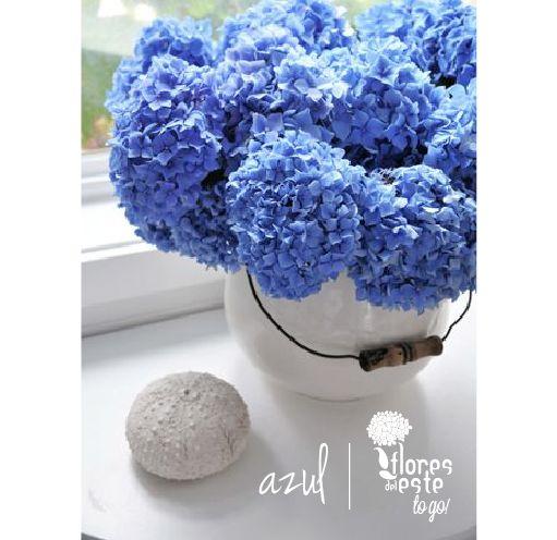 Azul! #hortensias #flores #decoración #diseño #elegancia #floresdelestetogo #floresdeleste