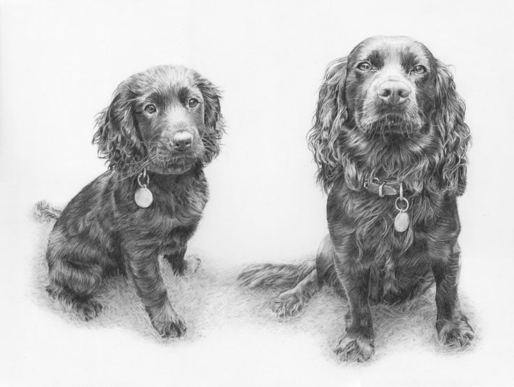 http://annabregmanportraits.co.uk/pet-gallery/