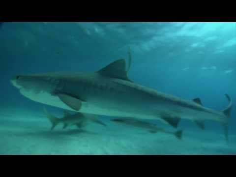 Shark Videos for Kids