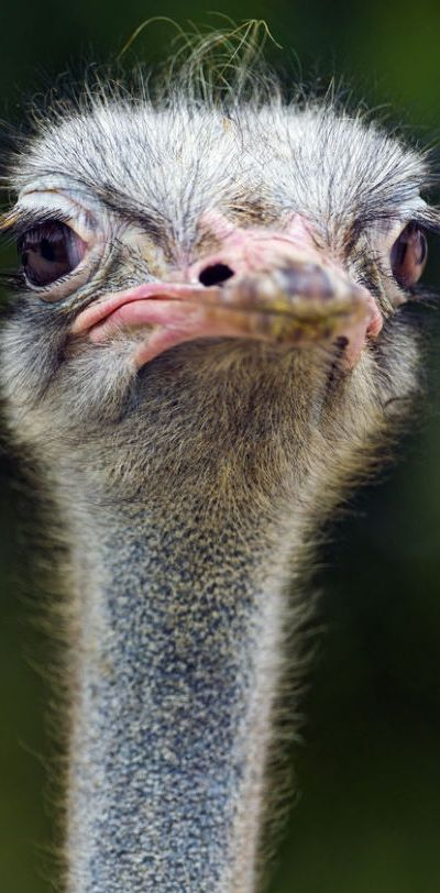 Ostrich…not necessarily warm and fuzzy, but how can you not love that face?