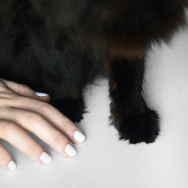 minimal style white black purejulia nails hand cat blackcat