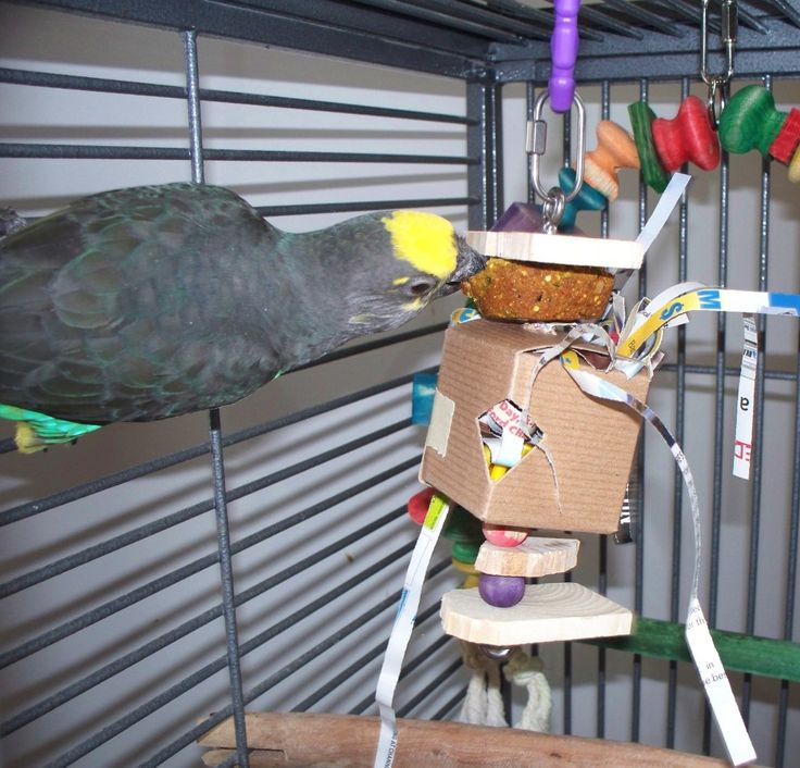 my favorite bird parrot The parrot is a very beautiful bird it is lovely to look at it has a red beak its feathers are green some of parrots have red feathers at the top related.