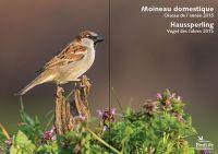 Vogel des Jahres 2015: Haussperling | BirdLife Schweiz/Suisse/Svizzera