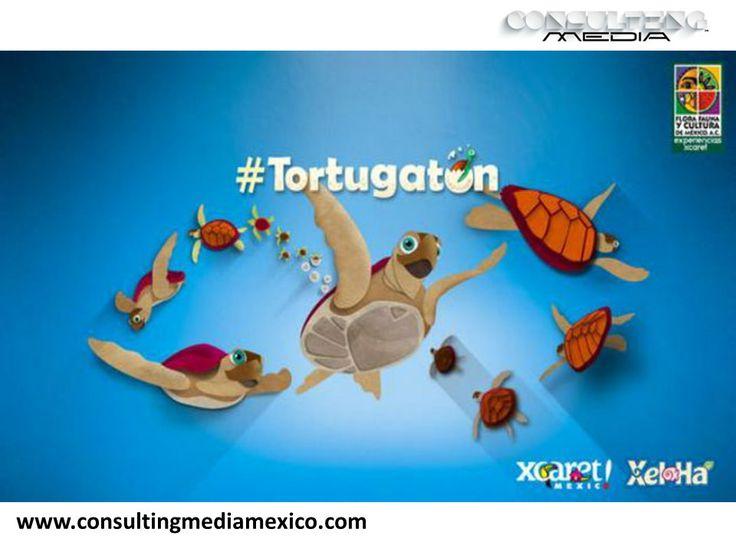 """LA MEJOR AGENCIA DIGITAL. La agrupación ambientalista """"Flora, Fauna y Cultura de Cancún"""" en conjunto con la empresa operadora de los parques Xcaret y Xel-Há, lanzaron por cuarto año consecutivo el #Tortugatón On Line. Este movimiento permite proteger y financiar el programa de conservación de tortugas  más grande de México. Con cada mención del hashtag, a través de distintas redes sociales como: Facebook, Vine, Twitter, Instagram y Google+, se aportará un peso para el Programa de…"""