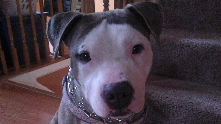 Petition · REPEAL the ban of innocent Pit Bulls in Prince George County. · Change.org