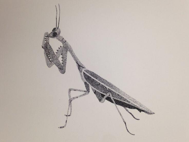 insecto, puntillismo, blanco y negro, grillo