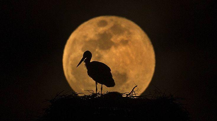 Cómo fotografiar la Luna   Blog Punto de Enfoque   EL PAÍS