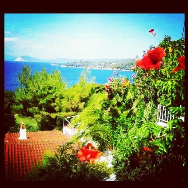 .@emilyjmarsden | #cute #holiday #view #memories #missit #skiathos #island #walk #flowers #sea ... | Webstagram - the best Instagram viewer