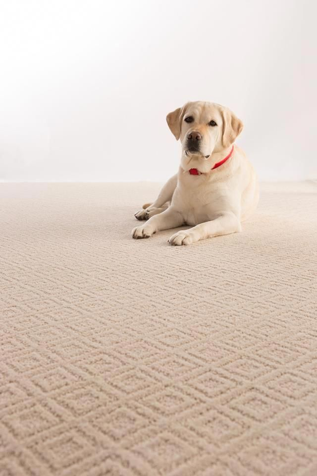Best Cost Of Carpet Runners For Stairs Hallway Carpet Runners 400 x 300