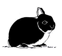 mini lop coloring pages | 40 best Mini Rex Bunnies images on Pinterest | Bunnies ...