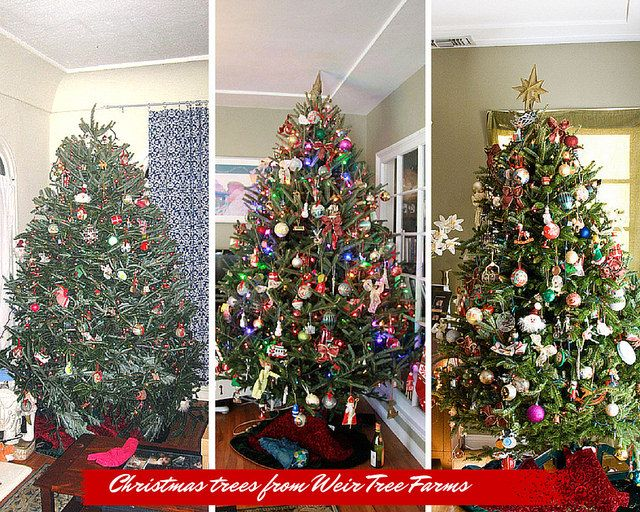 Where to Buy your Real Christmas Tree Online - The Domestic Front