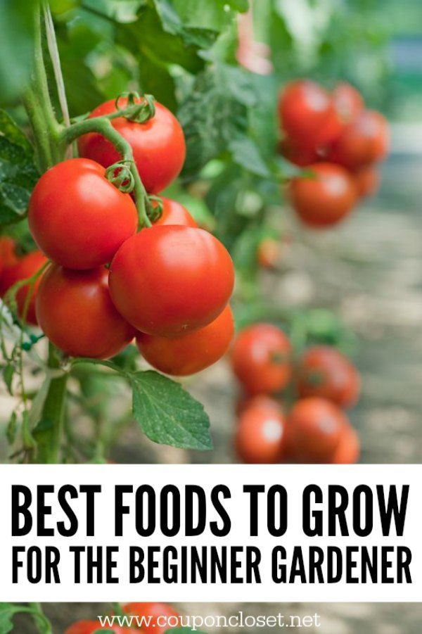 Best 25 Beginner Vegetable Garden Ideas On Pinterest Beginners Gardening Vegetable Gardening
