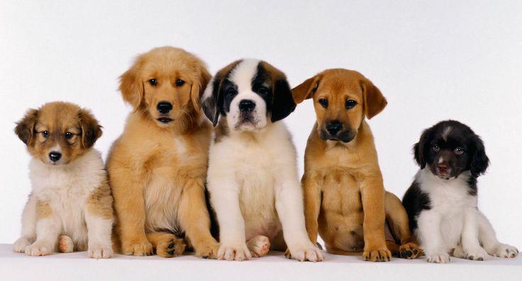 медицинскому применению имена планет для собаки почтовый идентификатор