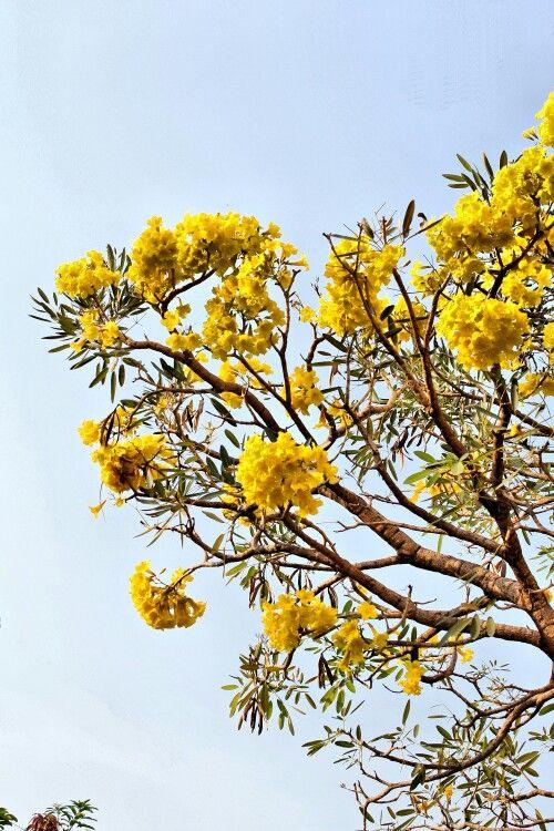 Flower on summer