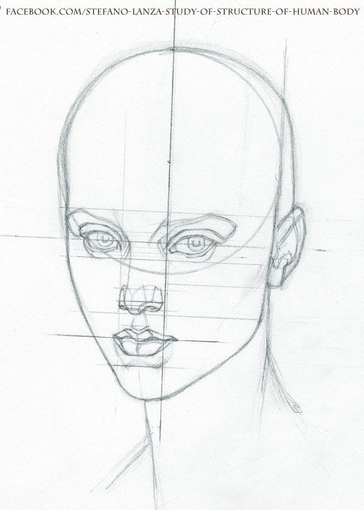 Anatomy of human body sketches