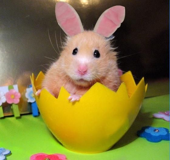 My hamster happy Easter.