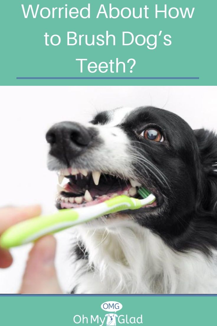 Do You Really Know How To Brush Dog S Teeth At Home Dog Teeth Dogs Dog Health Tips