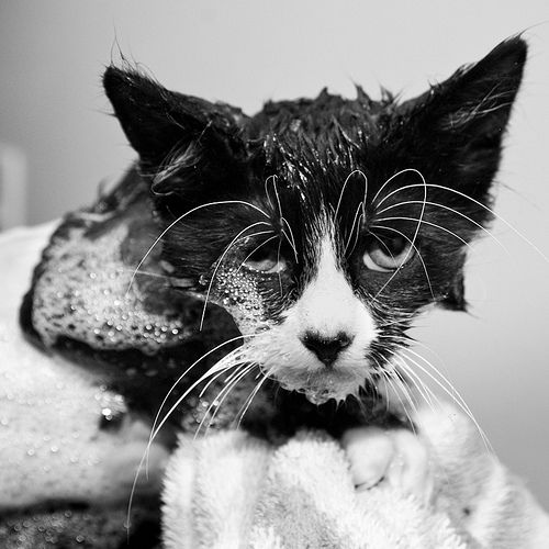 Melis, I thought you'd like this one :): Cats, Animal Faces, Funny Photos, Cat S Whiskers