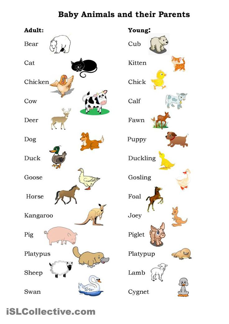 best 25 names of baby animals ideas on pinterest animal home names names of fingers and. Black Bedroom Furniture Sets. Home Design Ideas